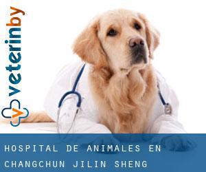 Hospital de animales en Changchun (Jilin Sheng)