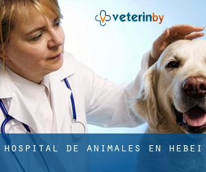 Hospital de animales en Hebei