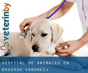 Hospital de animales en Rossosh' (Voronezj)