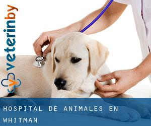Hospital de animales en Whitman