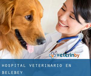 Hospital veterinario en Belebey