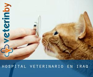 Hospital veterinario en Iraq