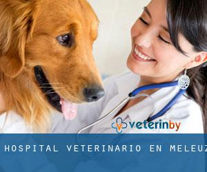 Hospital veterinario en Meleuz