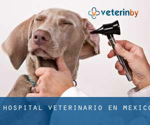 Hospital veterinario en México