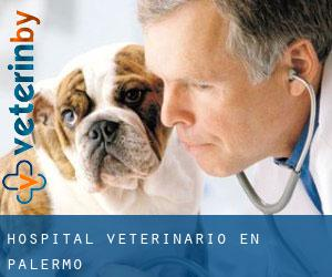 Hospital veterinario en Palermo