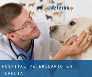 Hospital veterinario en Turquía