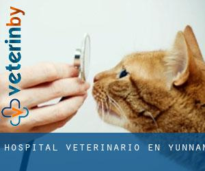 Hospital veterinario en Yunnan