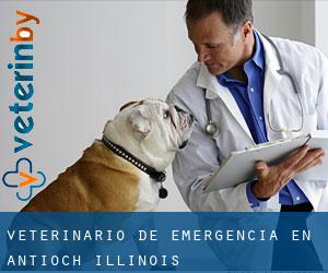 Veterinario de emergencia en Antioch (Illinois)