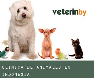 Clínica de animales en Indonesia