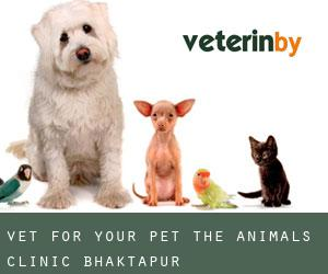 Vet for Your Pet- the Animals' Clinic (Bhaktapur)