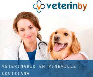 Veterinario en Pineville (Louisiana)