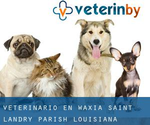 veterinario en Waxia (Saint Landry Parish, Louisiana)