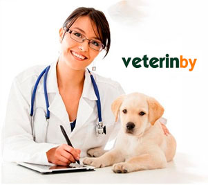 Veterinario en Estados Unidos