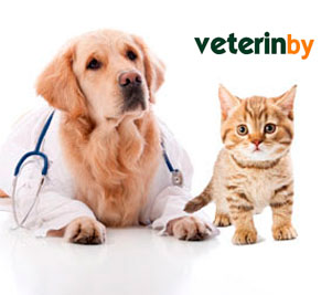 Hospital veterinario en Fushun
